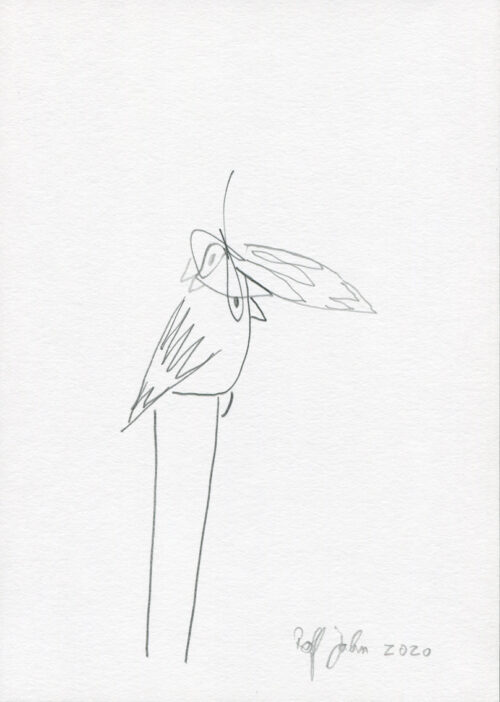rolf jahn siamesische vögel 2020 blei und farbstift auf papier din a5